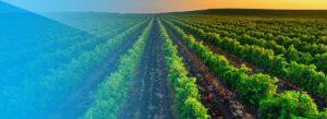 Header-Vineyard-at-Sunset